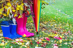 Autumn. Two pairs of rubber boots and colorful umbrella with autumnal leaves. Pairs of pink (adult) and blue (child) rainboots. Protection in the rain. Copy Stock Image