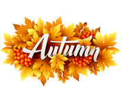 Autumn typographic. Fall leaf. Vector illustration Royalty Free Stock Images
