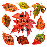 Autumn typographic. Fall leaf. Vector illustration EPS 10 Royalty Free Stock Photography