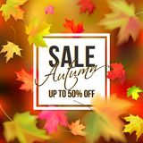 Autumn typographic sale. Red, yellow maple leaves on a colour blurred background. Photo realistic leaves big, small, blurry. White banner and black text autumn Royalty Free Illustration