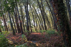 Autumn in the Ukrainian city Kirovograd Stock Image