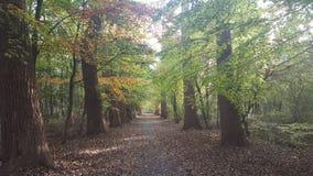 Autumn In uma floresta Fotografia de Stock Royalty Free