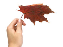 Autumn umbrella. Made of leaf on white background Stock Photography