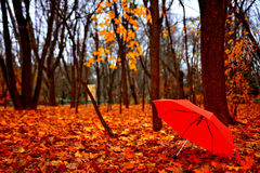 Autumn Umbrella Stock Photos