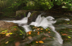 Autumn underwater. royalty free stock photography