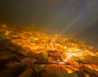 Autumn underwater on the lake Stock Images