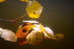 Autumn underwater on the lake Royalty Free Stock Photos