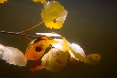 Autumn underwater on the lake Royalty Free Stock Photos