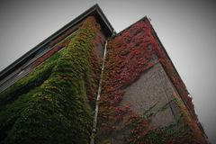 Autumn upwards the walls. A building in my town,  is every autumn, so beautiful with its colored leaves Royalty Free Stock Image