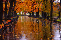 Autumn urban alley with yellow trees chestnut trees on the sides in the rain. stock photos