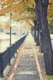 Autumn urban path. Autumn landscape with fallen leaves on the street (portrait orientation Royalty Free Stock Photos