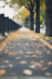 Autumn urban path. Autumn landscape with fallen leaves on the street (portrait orientation with selected focus on the leafs Stock Photos