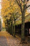 Autumn urban view Royalty Free Stock Image