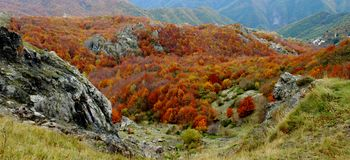 Autumn in Val Taro stock photo