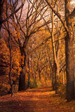 Autumn valley Stock Images