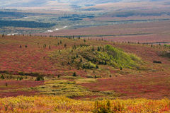 Autumn in Valley in Denali National P Stock Photography