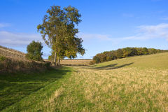 Autumn valley. A green grassy valley with an ash tree and autumnal woodland under a blue cloudy sky in the yorkshire wolds Royalty Free Stock Photos