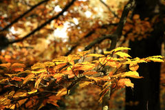 Autumn variations. Art of nature. Royalty Free Stock Photography