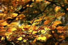 Autumn variations. Art of nature. Royalty Free Stock Images