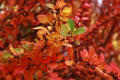 Autumn in a variety of colors Royalty Free Stock Photos