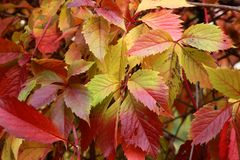 Autumn in a variety of colors Stock Photography