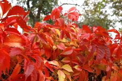 Autumn in a variety of colors Stock Image