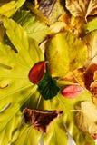 Vivid yellow orange autumn colorful leaves. Winter natural image, close up Royalty Free Stock Photo
