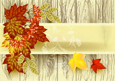 Autumn vector Royalty Free Stock Photography