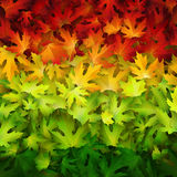 Autumn vector background with colorful leaves Stock Images
