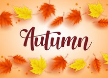 Autumn vector background design with colorful fall season maple leaves elements. And autumn text in orange background. Vector illustration Stock Photos