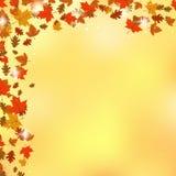 Autumn vector background Stock Photos