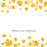 Autumn vector background. Gold leaves Royalty Free Stock Photos