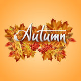 Autumn vector background. Hand-written lettering on a background of autumn leaves with rowan. Typography Royalty Free Stock Photography
