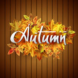 Autumn vector background. Hand-written lettering on a background of autumn leaves. Typography Royalty Free Stock Photo