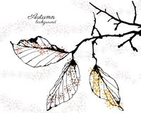 Autumn vector background. With leaves Royalty Free Illustration