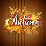 Autumn vector background with  leaves. Hand-written lettering. Typography. Autumn vector background with autumn leaves. Hand-written lettering Royalty Free Stock Photography
