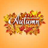 Autumn vector background with  leaves and rowan. Hand-written lettering. Autumn vector background with autumn leaves and rowan. Hand-written lettering Royalty Free Stock Image