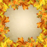 Autumn vector background with  leaves in square frame. Autumn vector background with autumn leaves in square frame Stock Photo
