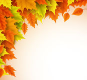Autumn vector background template. Fall season maple leaves elements stock illustration