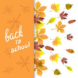 Autumn vector background with watercolor colorful leaves Royalty Free Stock Image