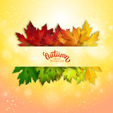 Autumn vector card, colorful leaves background Stock Photo