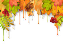Autumn Vector Dripping Paint Leaves Royaltyfri Foto