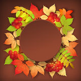 Autumn Vector Fall Leaves Stock Photography
