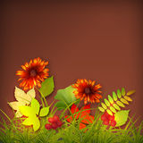 Autumn Vector Fall Leaves Stock Images