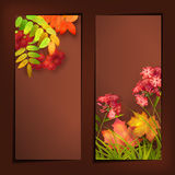 Autumn Vector Fall Leaves Banners. Vector autumn banners with rowan berry and maple fall leaves, flowers, grass Stock Photos