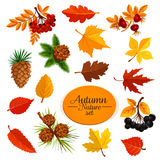 Autumn vector icons of leaf fall or forest berry Royalty Free Stock Photo