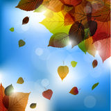 Autumn vector leafs background- fall illustration with back light. And blue sky Royalty Free Stock Images