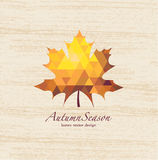Autumn vector leaves Stock Image