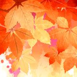Autumn Vector Watercolor Fall Leaves Stock Image