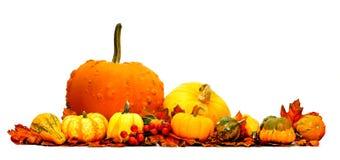 Autumn vegetable border Stock Photography